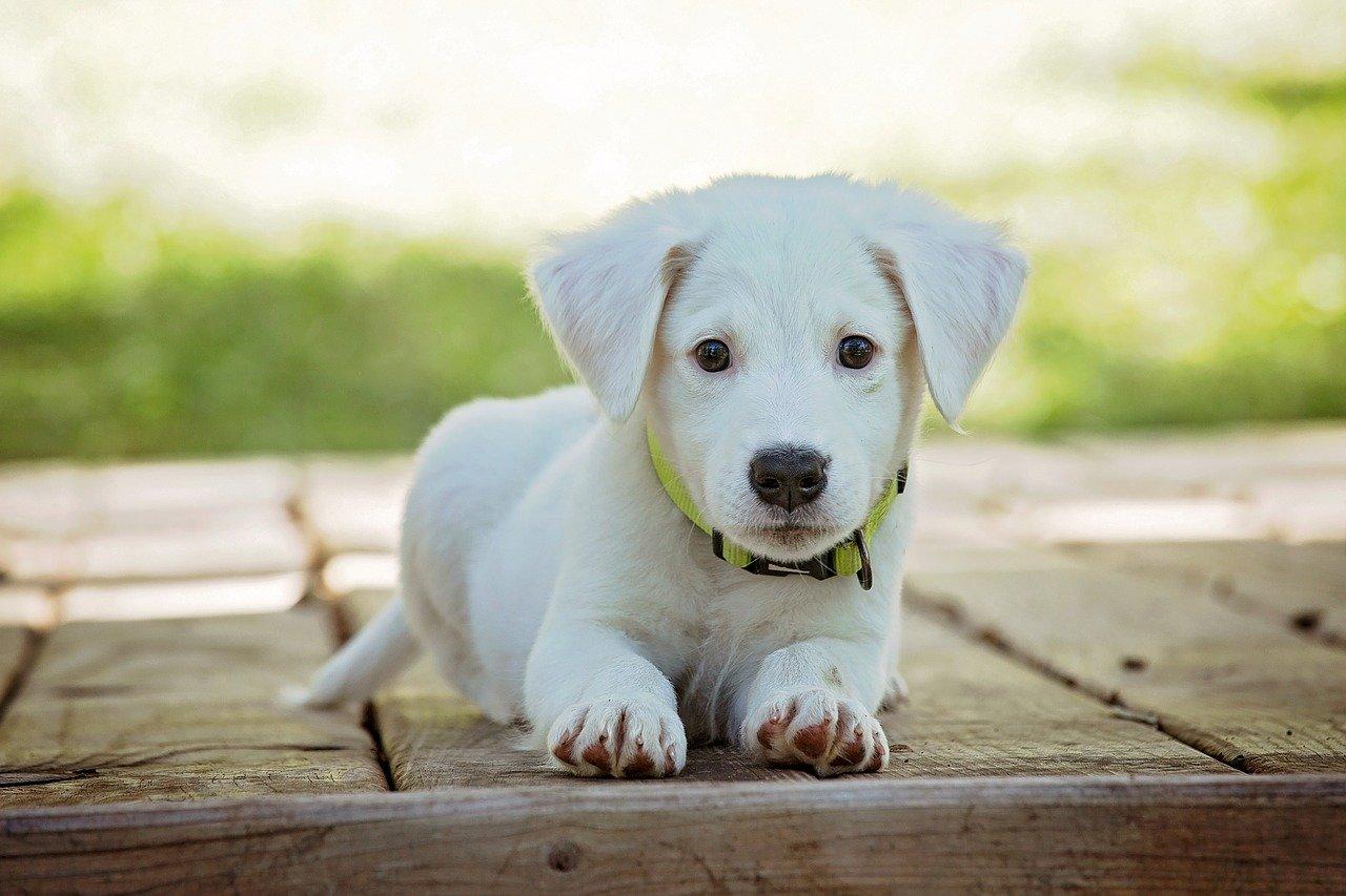 nome per il tuo cane