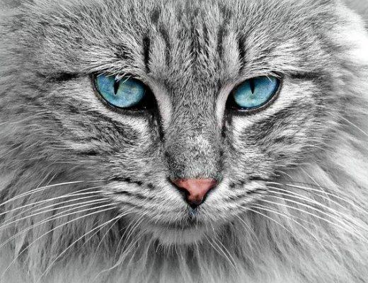 storie sui gatti
