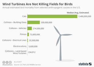 uccisioni uccelli