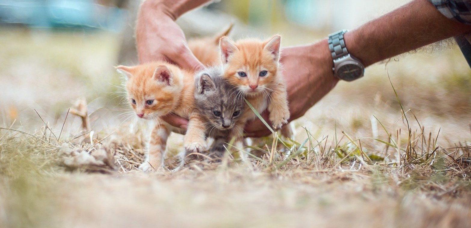 Cosa fare se trovo dei gattini
