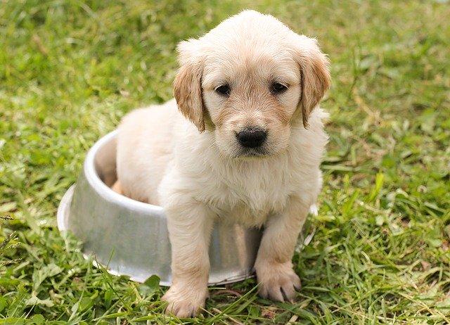 i disturbi alimentari nei cani